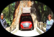 Redwood_National_and_State_Parks