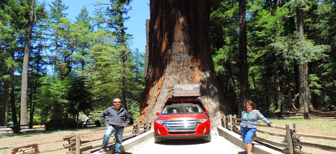 Avenue-of-the-Giants-Humboldt-County