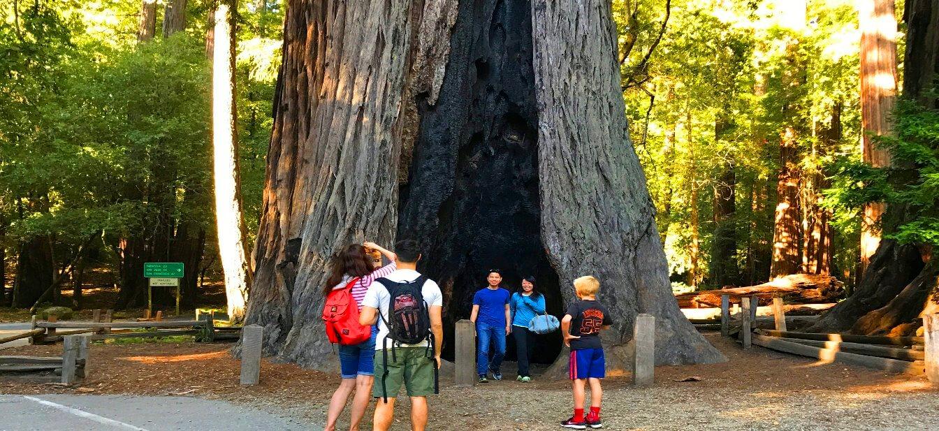 Big-Basin-old-forest-Redwoods-State-Park