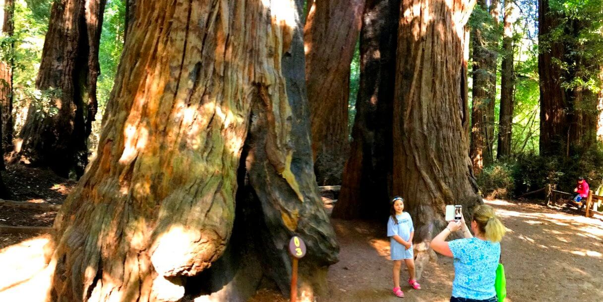 Big-Basin-redwoods-silicon- valley-tours