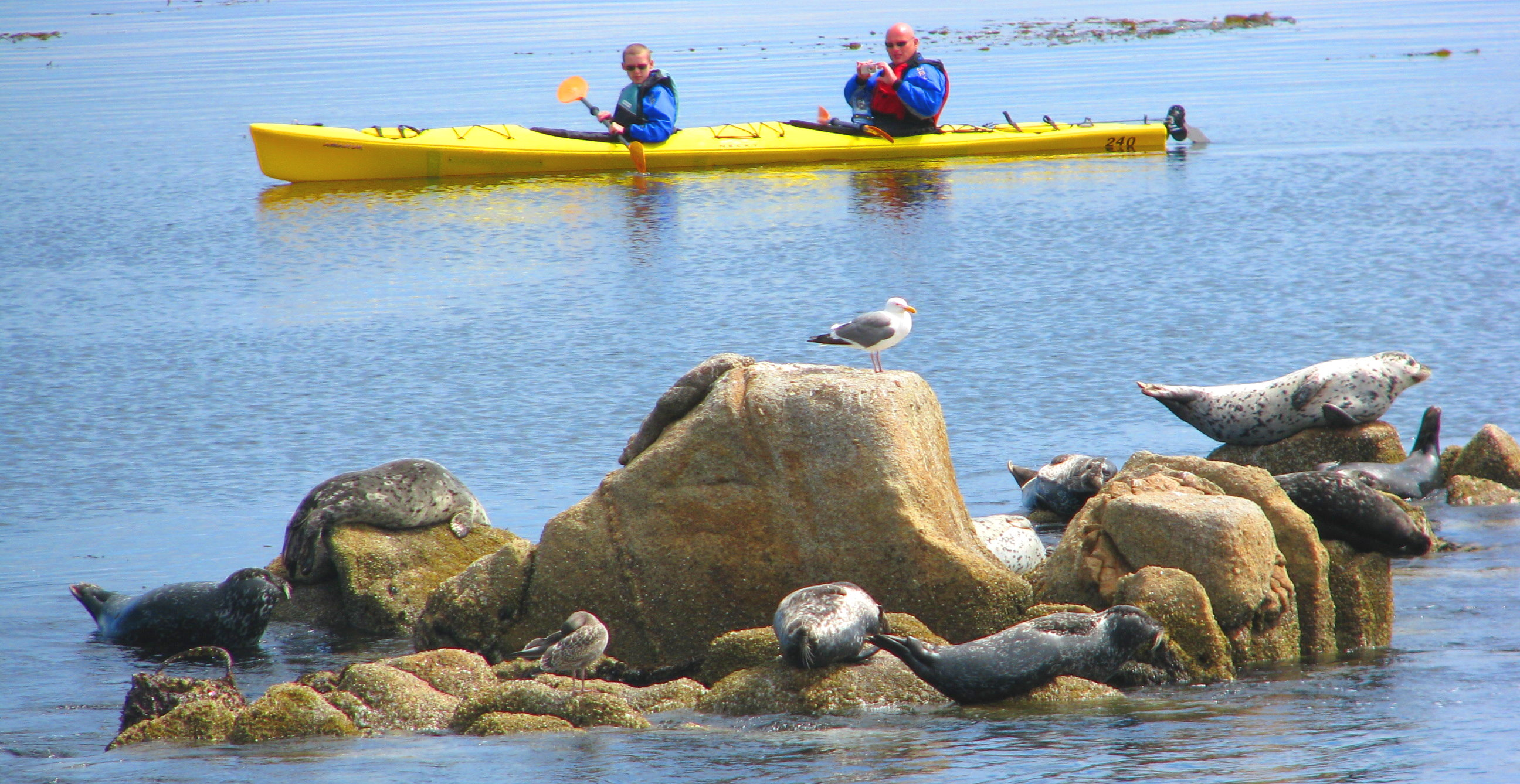 Big-Sur-Outdoor-Activities-Monterey-Things-to-Do-TripAdvisor