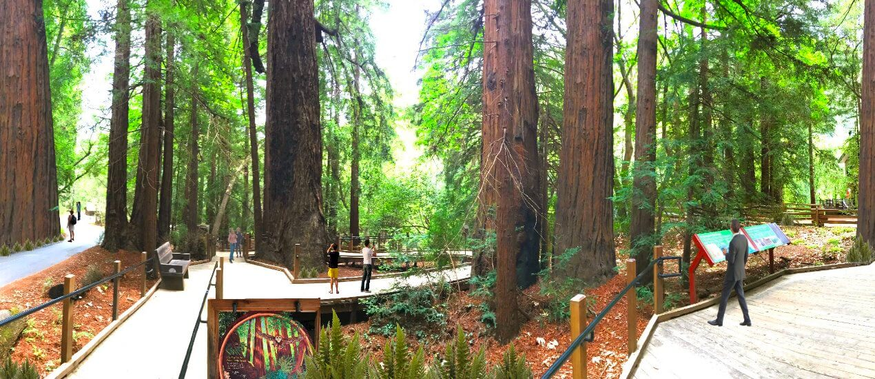 Giant-Redwood-Trees-Visit-Forests-of-Redwoods-in-Big-Sur-Pfeiffer-State-Park