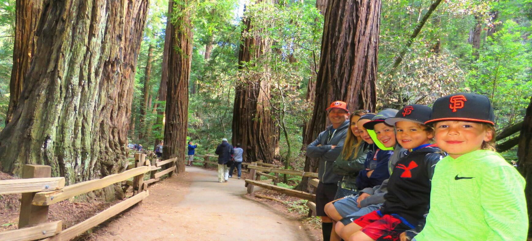 Muir-Woods -Park-Giant-Redwood-Trees