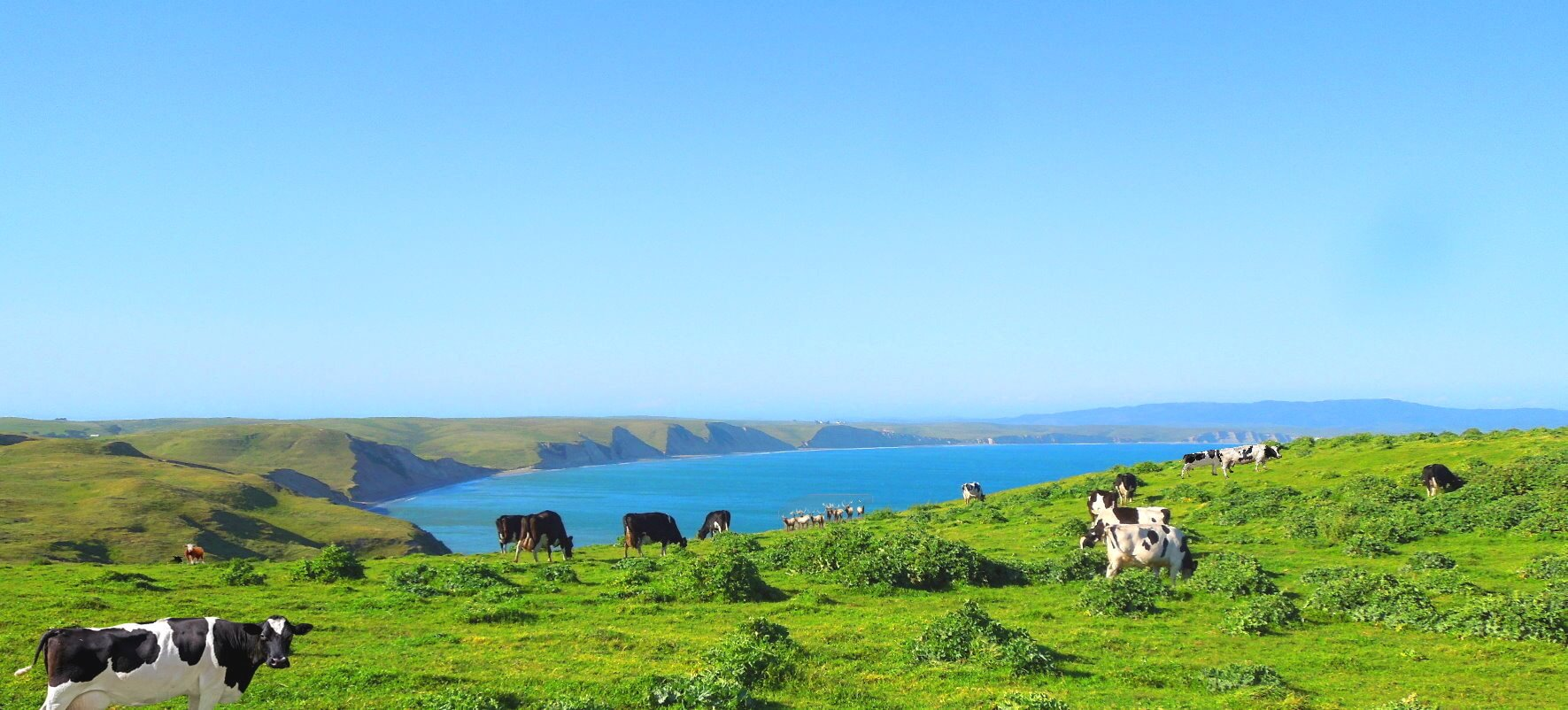 Point-Reyes-National-Seashore-Things-to-See
