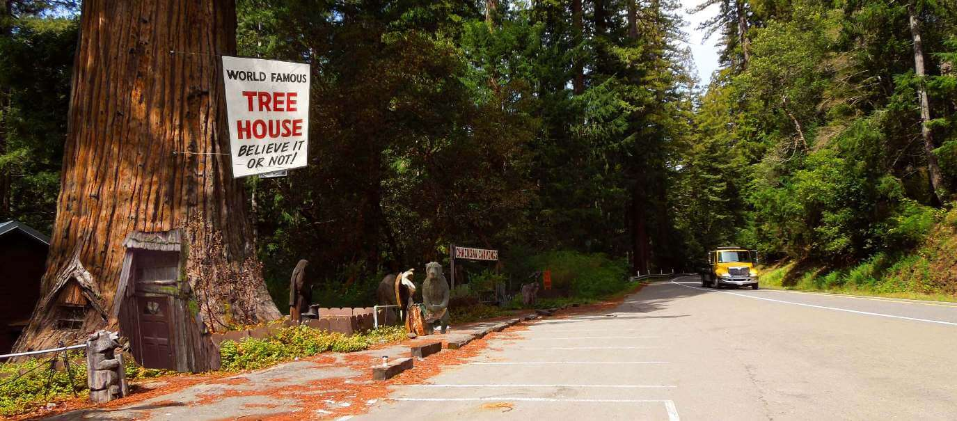 Redwood-National-Park-Tours-from-San-Francisco