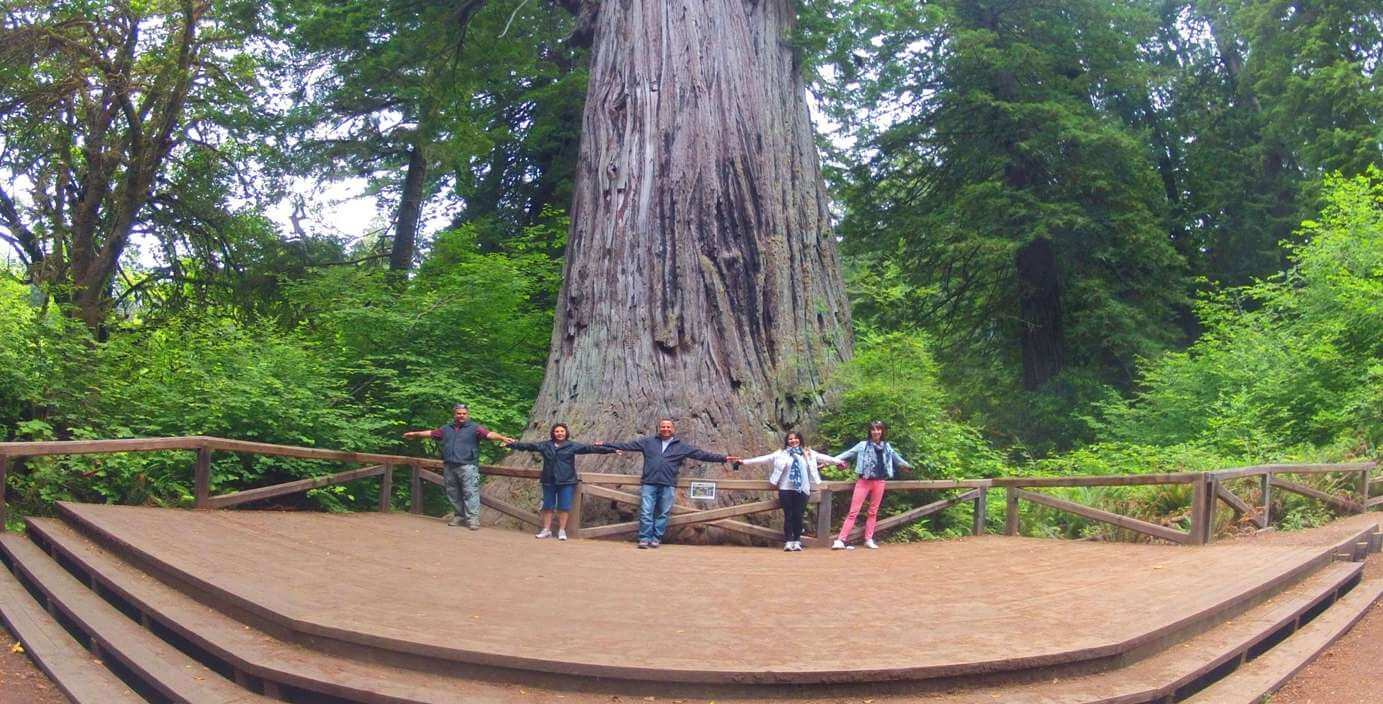 Redwood-National-Park-Travel-Guide