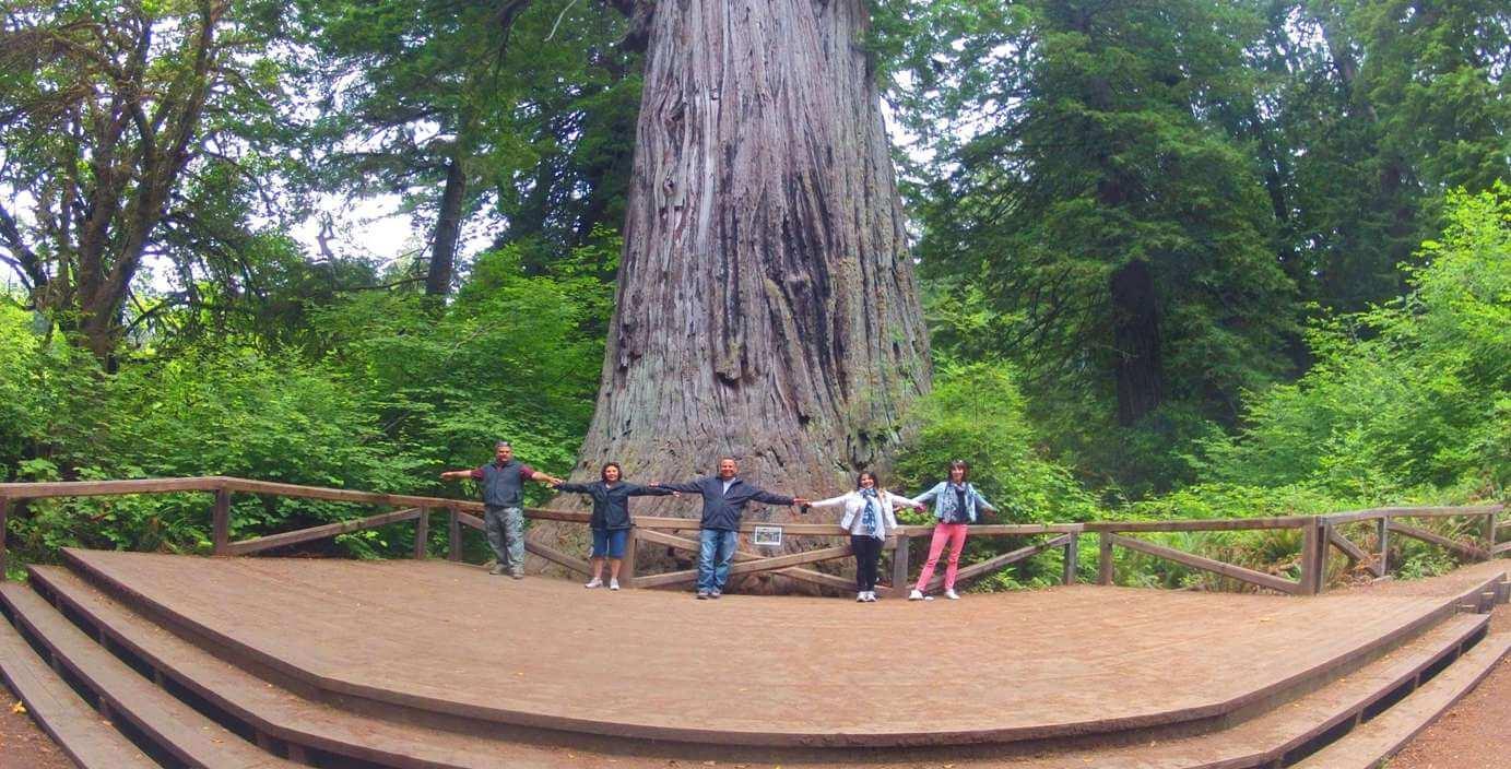 Redwood-National-Park-Travel-Guide