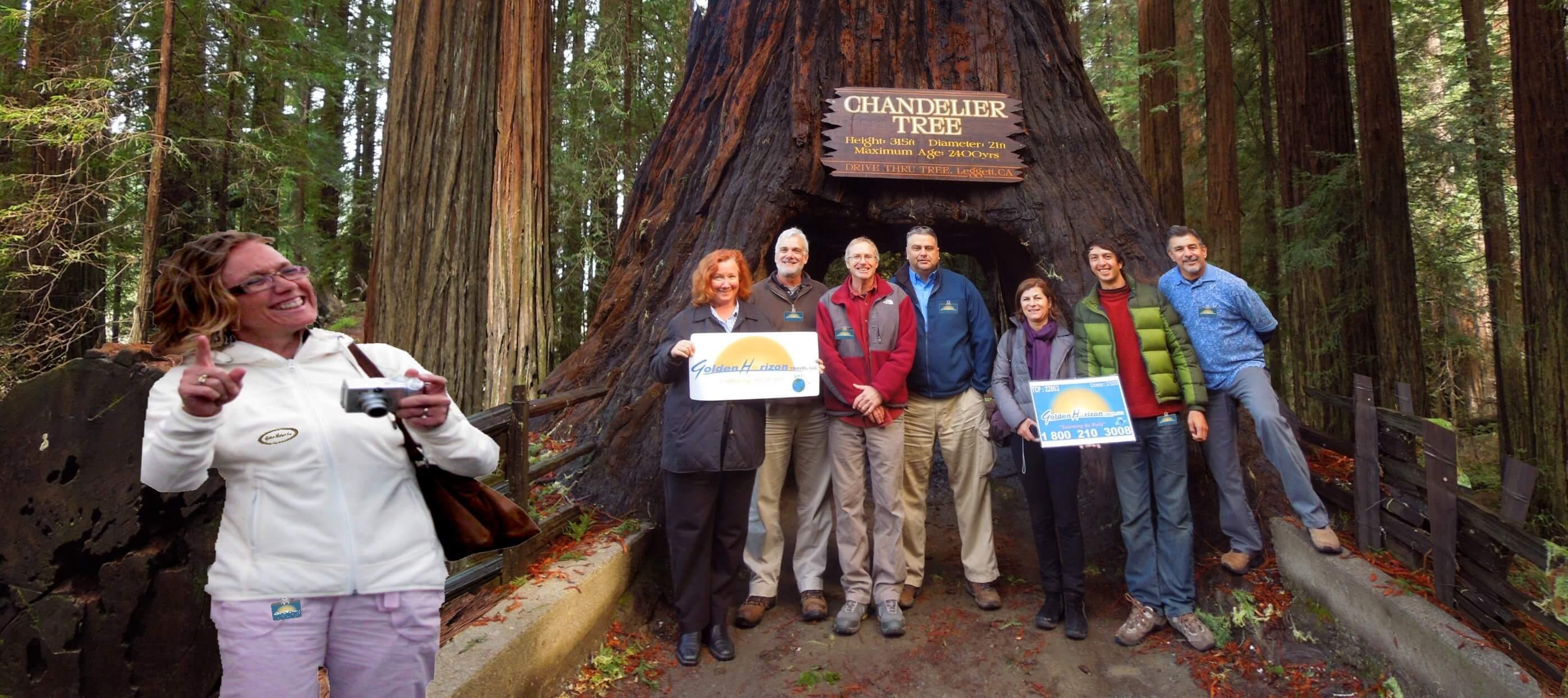 Redwood-National-Parks
