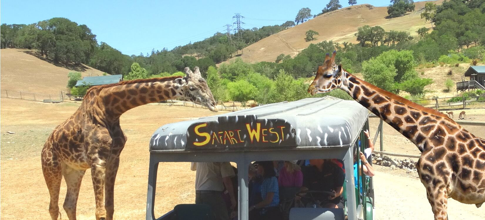 Safar-Animal-Park-Jeep-Tour-Outdoor-Adventures