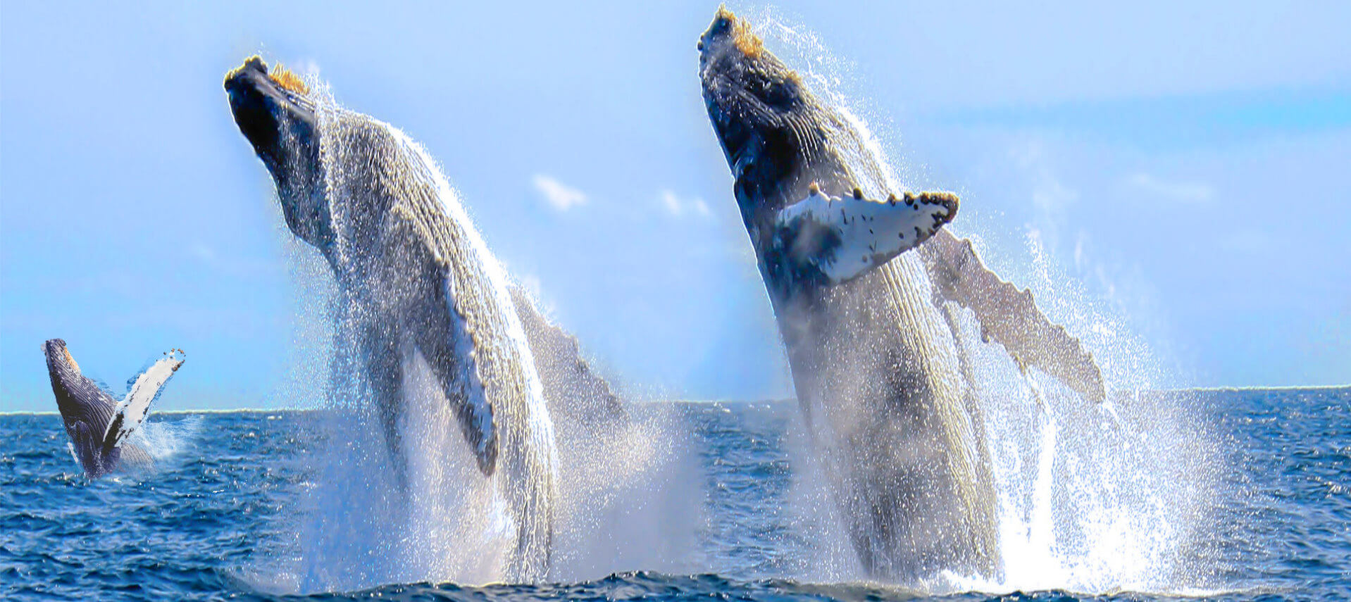 San-Francisco Whales-watching-Tour- Monterey-Bay-Attractions(1)