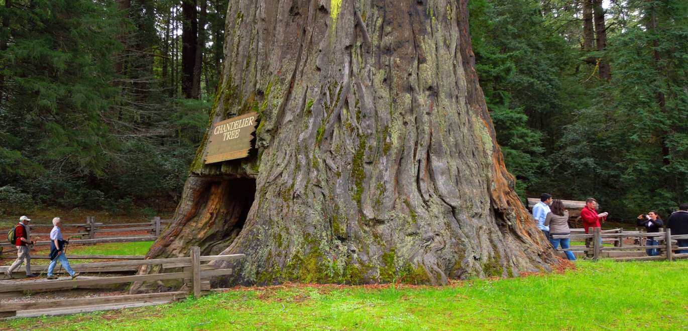 See-Tall-Trees-at-Redwoods-State-and-National-Parks
