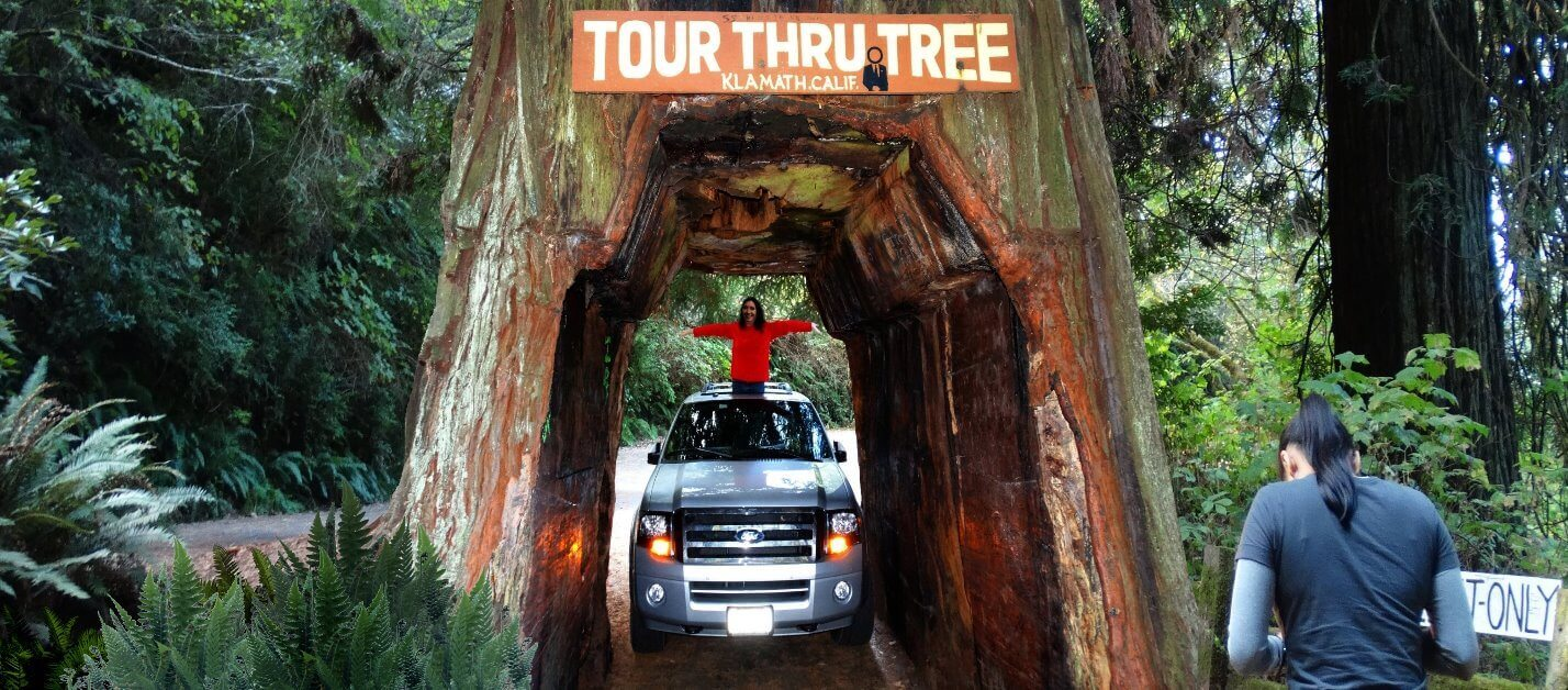 Tour-the-Avenue-of-the-Giants