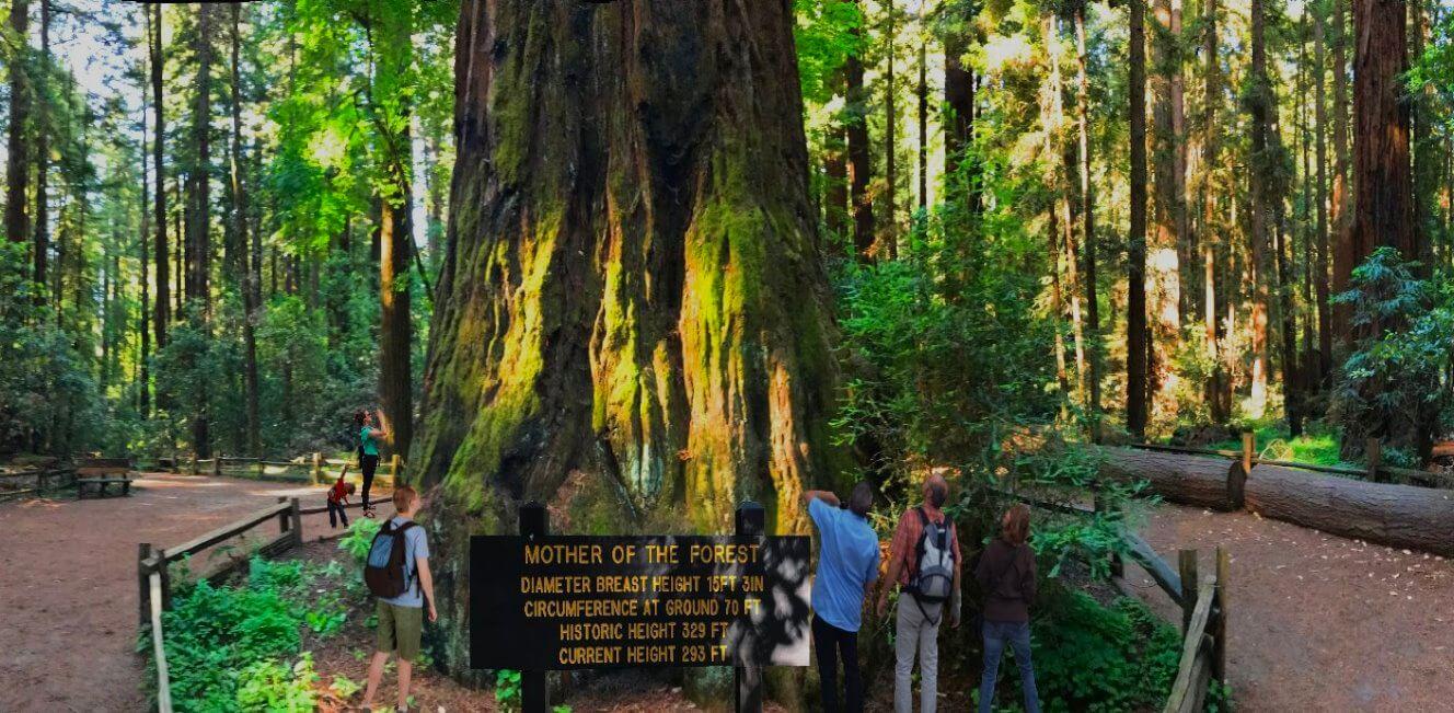 Visit-Big-Basin-Giant-Redwoods