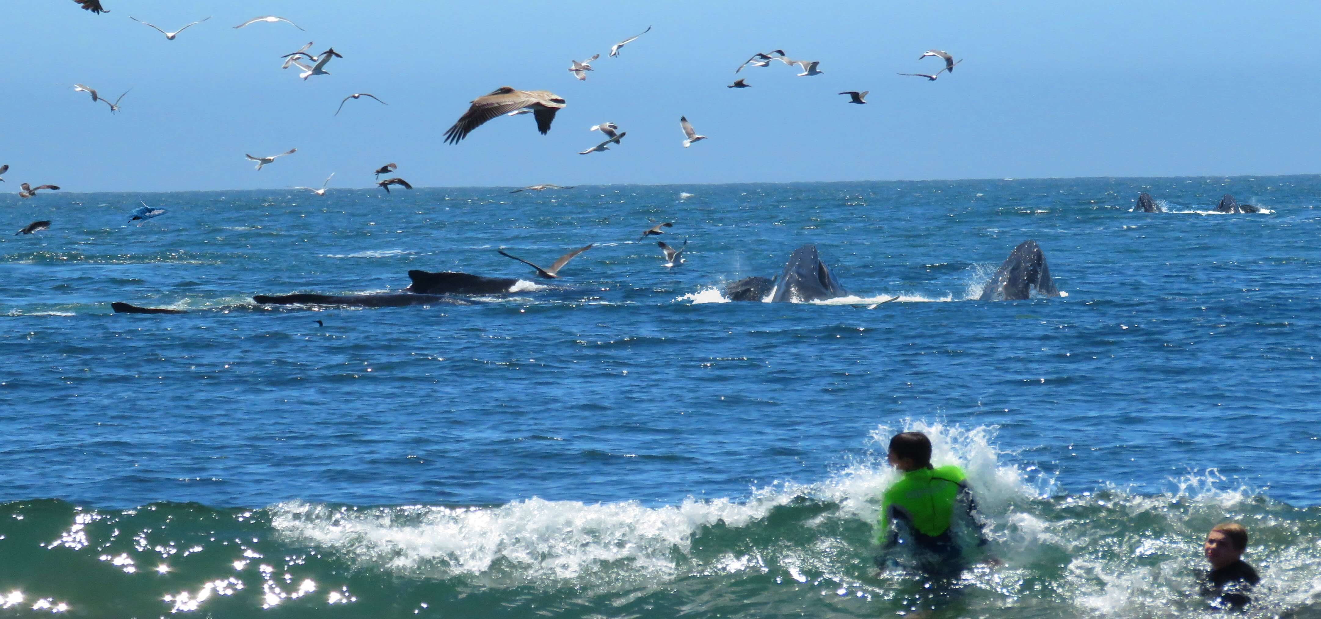 Whale-Watching-in-San-Francisco