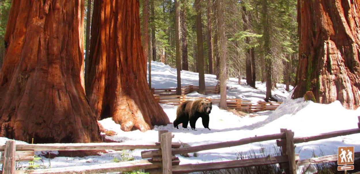 Yosemite-Giant-Sequoias