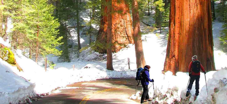 Yosemite_National_Park_Trip_Reviews_Giant_Sequoias_guided_tour_testimonials