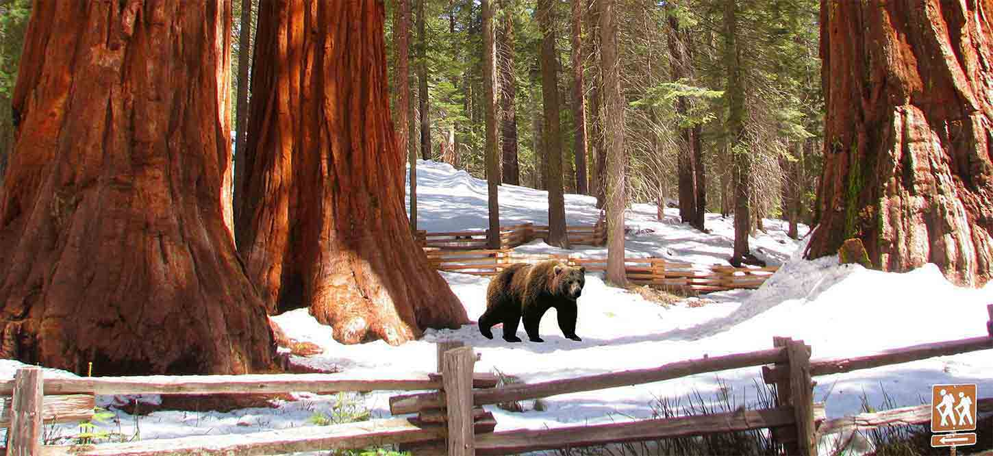 Yosemite_Private_Tours_and_Giant_Sequoias_Tour_from_San_Francisco_California_Parks_Activities