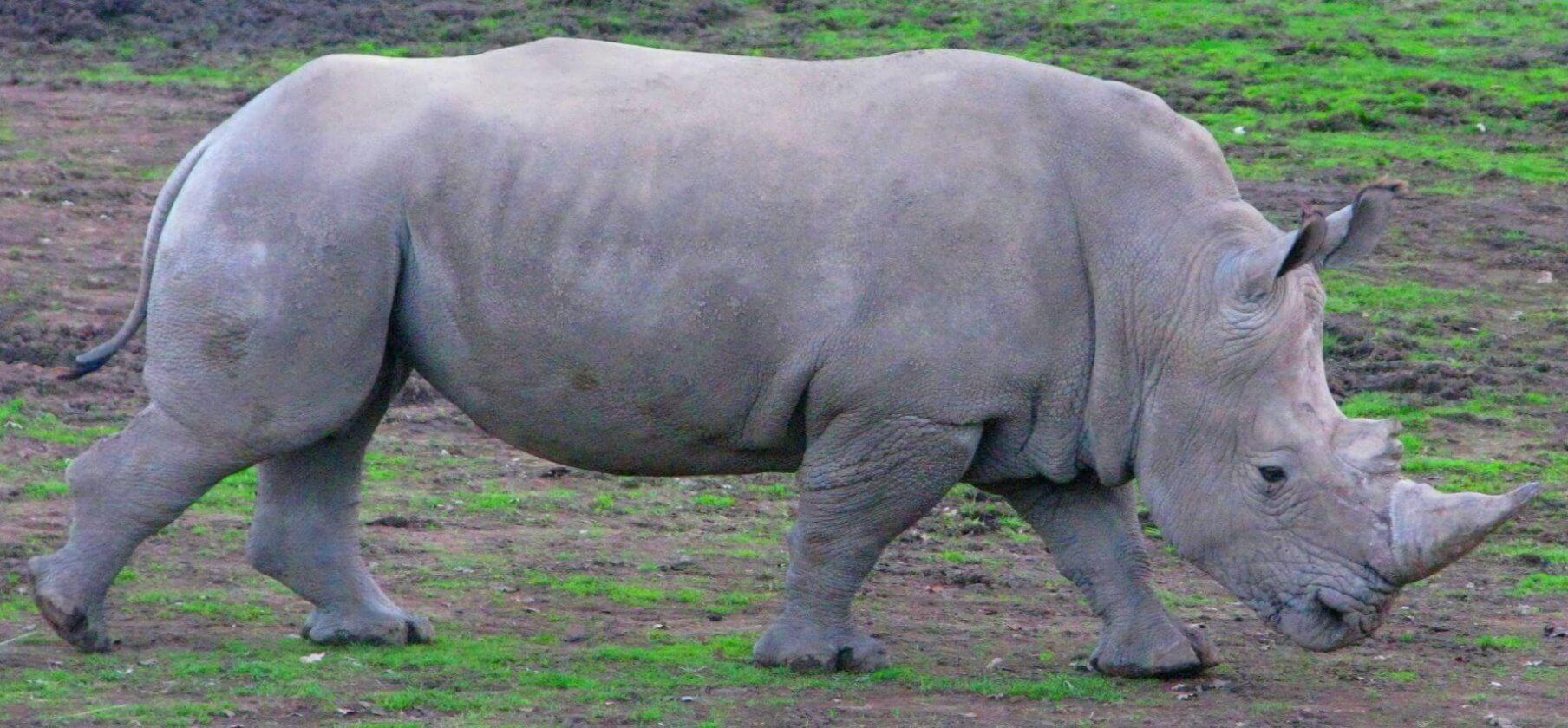 safari_wild_animal_park_+_zoo_jeep_tour
