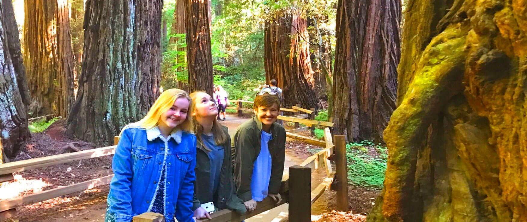 tour-durch-den-redwood-national-park-mit-riesenmammutbaumen-von-san-francisco