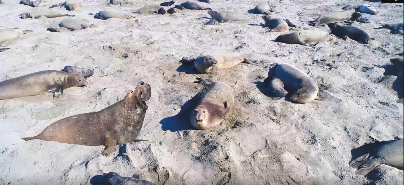 view-elephant_seals_on_california_coast_beache
