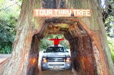Visit-Redwood-National-Park.jpg